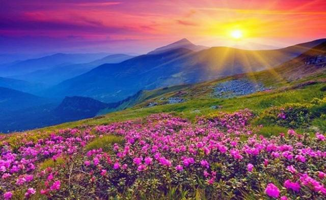 Valley_of_flowers_2